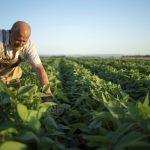 Што треба да знаете за пописот: Ќе се собираат податоци за земјоделството